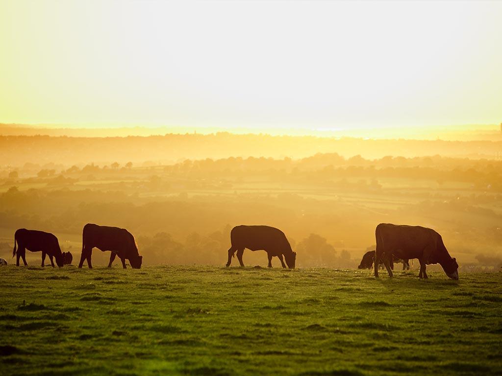International Livestock Identification Association